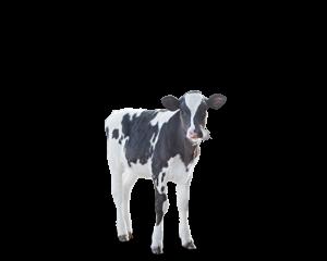 Dairy – East Gate Feed & Grain